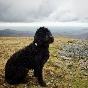dog on snowdon