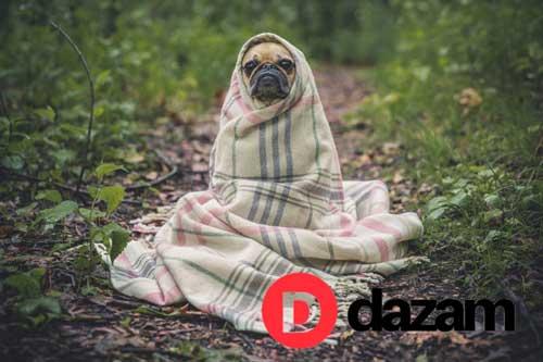 pet-travel-accessories