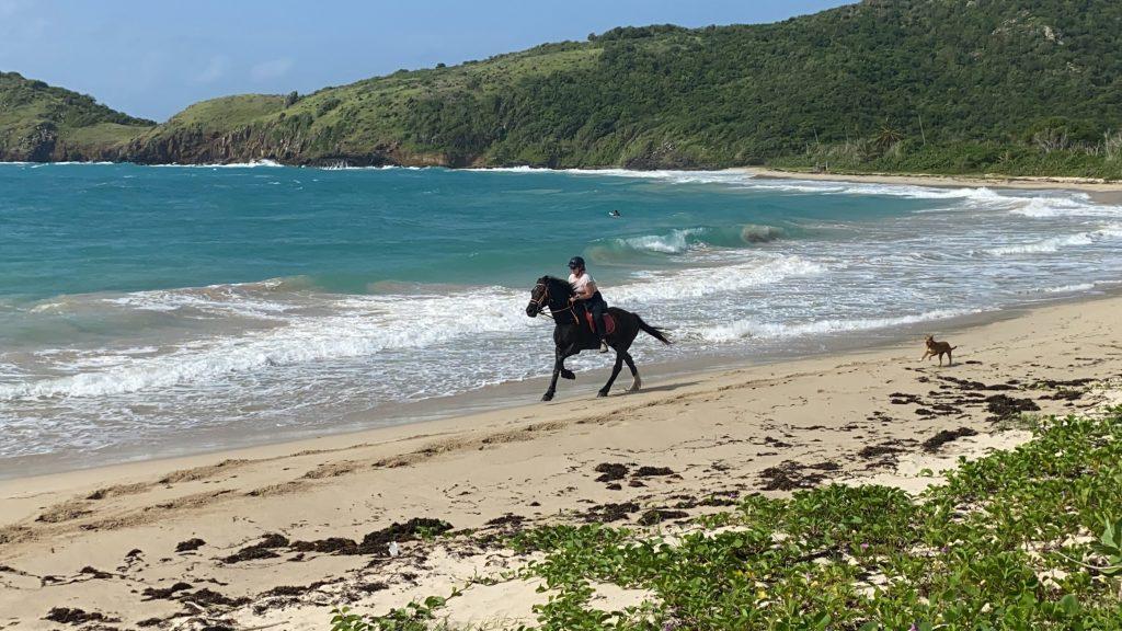 rendezvous bay horse ride