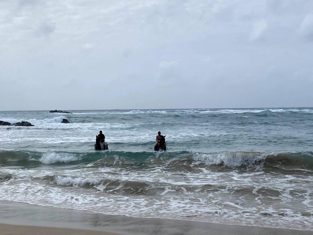 horses in the sea antigua