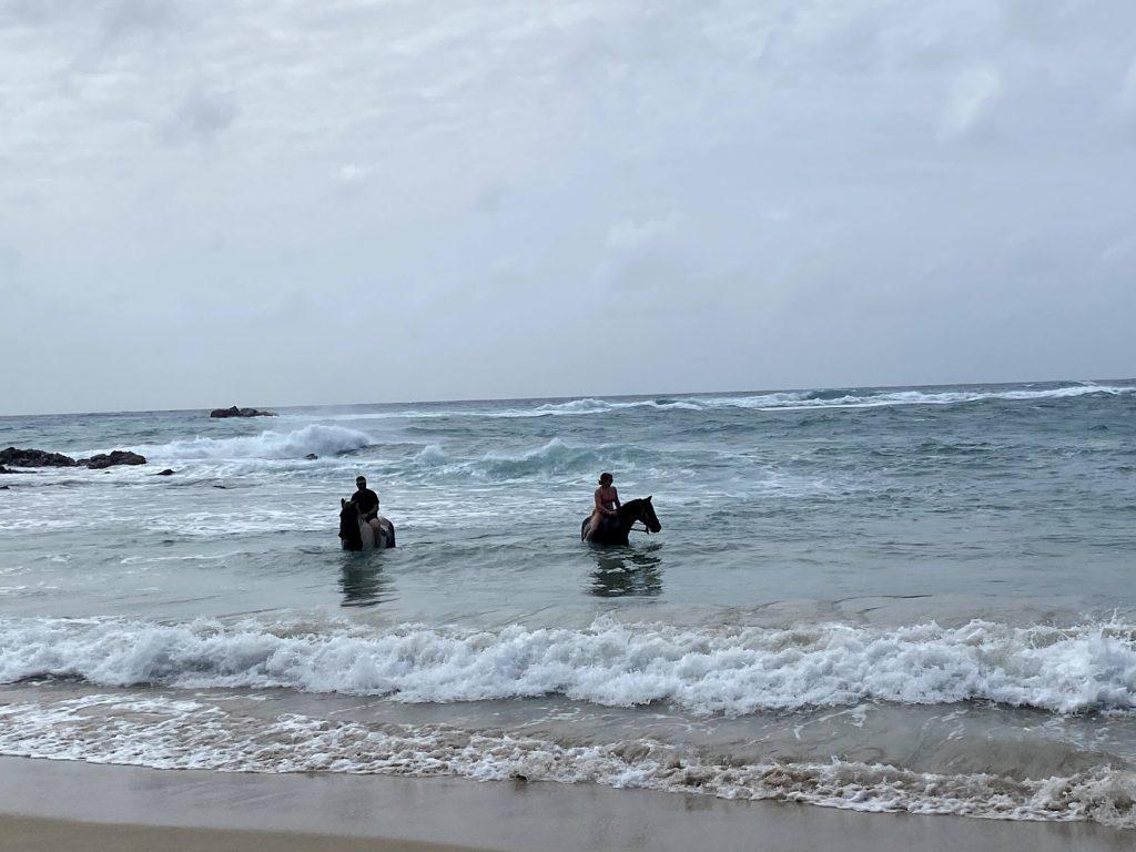 swimming with horses antigua
