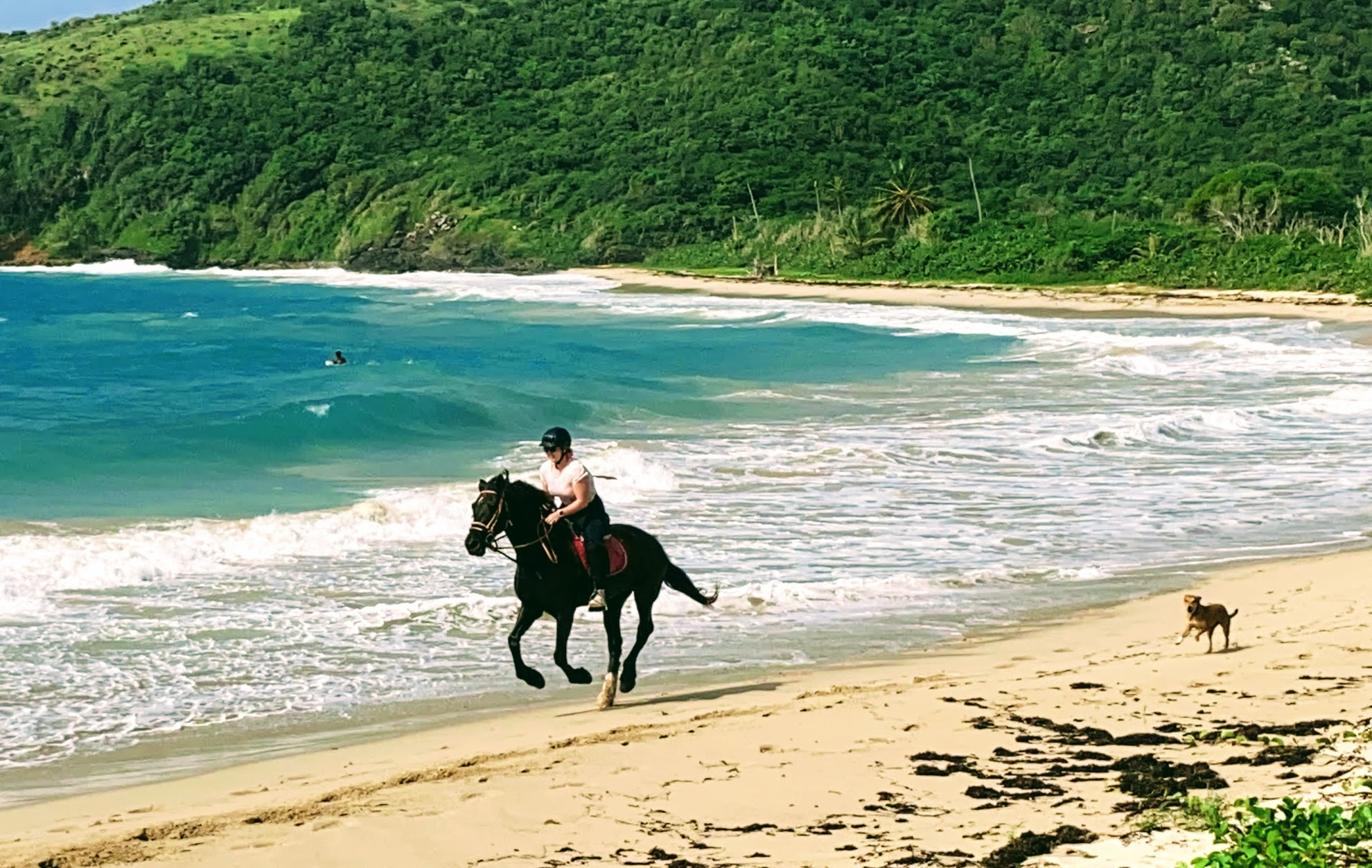 Horse riding on the beach antigua