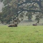 bedfordshire-walk