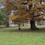 woburn-abbey-deer-park-walk
