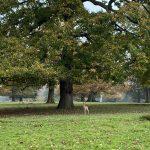 woburn-abbey-walk-route