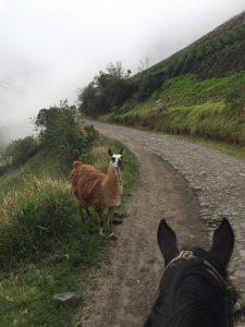 Horse-vs-Alpaca